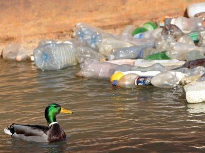 213-3 duck-plastic-bottle-e1516963563659