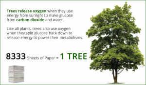 3- Tree-vs-Oxygen